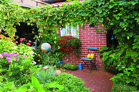 growing hops in your backyard can be a breeze home and garden