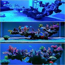 love this live rock insert Saltwater Aquariums