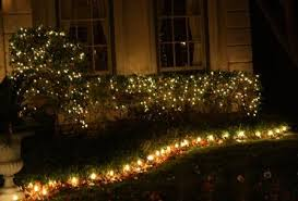 net christmas lights for small bushes pictures of christmas lights on bushes christmas card 2018