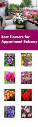 Best Flowers For Small Pots Best Flowers For Balcony Garden