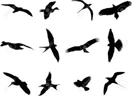 kiwi bird stock photos u0026 pictures royalty free kiwi bird images