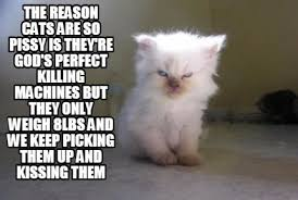 Cat Meme Maker - meme maker the reason cats are so pissy is theyre gods perfect