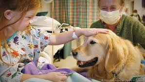 Comfort Dogs Certification The Beautiful And Inspiring Relationship Between People And