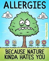 42 best allergy life images on pinterest funny stuff hilarious
