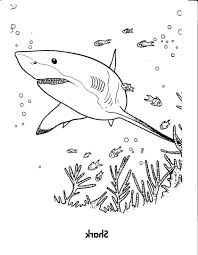 coloring pages shark coloring pages free tiger shark coloring