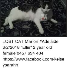 Lost Cat Meme - ld lost cat marion adelaide 622018 ellie 2 year old female 0457 634