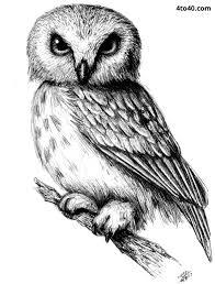 owl pencil sketch u2013 kids website for parents