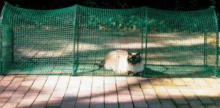 outdoor cat cages u0026 playpens you u0027ll love wayfair