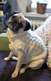 pug sweater pug slope archive sweater weather