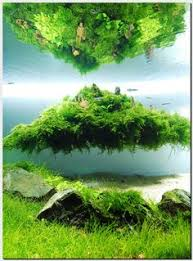 Aquascape Aquarium Plants When Setting Up Your Aquarium I U0027m Sure You Have A Rough Idea How