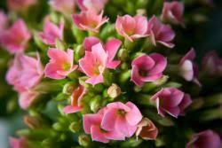 Indoor Flower Plants Indoor Winter Flowering Plants