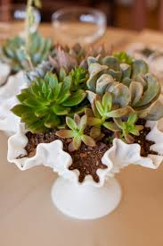 185 best images about succulents in weddings u0026 decor on pinterest