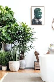 indoor plant display plant display plants display for event stage plants grouping plant