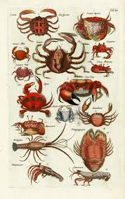 johnston merian historiae naturalis 1657 the english group