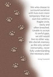 grieving loss of pet 17 best ideas about pet loss grief on pet loss dog 16397