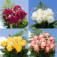 global roses cheapest your choice of dozen color roses with fillers global