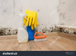 Corner Of Room by Black Mold Corner Room Wall Preparation Stock Photo 524345254
