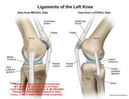 Knee Anatomy Pics 10093 02x Ligaments Of Left Knee U2013 Anatomy Exhibits