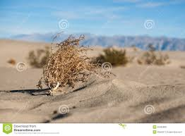 tumbleweed mojave desert tumbleweed stock photo image of park sagebrush