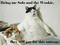 Star Wars Cat Meme - bring me solo and the wookie now star wars cats