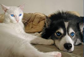 Are Dogs And Cats Color Blind All About Cat Eyes Petmd