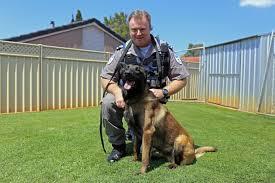 belgian shepherd sydney australian security guard of the year credits canine sidekick for