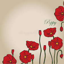 red poppy sketch 3 stock vector image 72829117