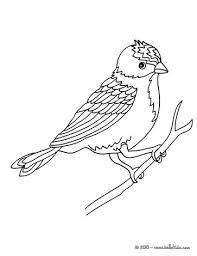 parrot coloring pages hellokids