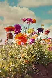 a garden of celebration flower flowers and gardens