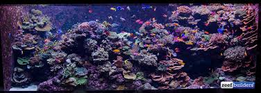 Aquascape Reef Full Tank Shots Of S E A Aquarium U0027s Incredible Public Reef