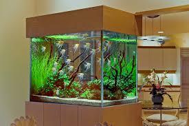 modern aquarium design ideas for living room area with nice glass
