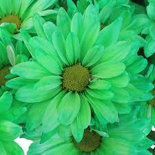 mint green flowers green flower