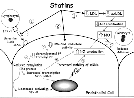 statin therapy in acute coronary syndromes arteriosclerosis