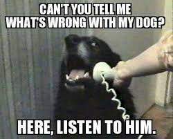 Vet Memes - 134 best veterinary humor images on pinterest veterinary