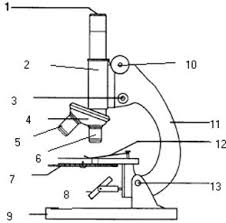 compound light microscope function introduction to the microscope lab