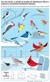 northeast ohio u0027s backyard birds cleveland com