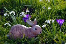Easter Bunny Lawn Decorations by Free Images Nature Grass Plant Lawn Meadow Sweet Flower