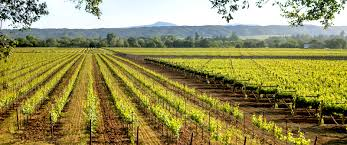 california wine country in three ways trek travel