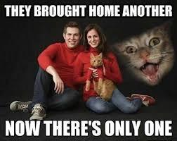Anxiety Cat Memes - hilarious chronic anxiety cat meme segerios com segerios com