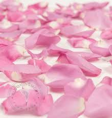 where can i buy petals wholesale lavender petals 3000 5000 petals free shipping