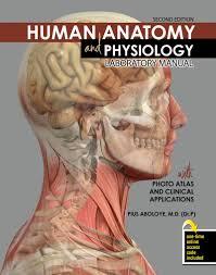 Anatomy And Physiology 7th Edition Saladin Human Anatomy Textbook