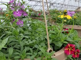 native plant nursery pa groff u0027s plant farm kirkwood lancaster county flowers gardens plants
