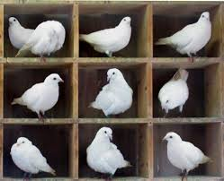 pigeonhole principle wikipedia