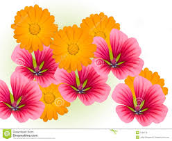 Decorative Flowers by 28 Decorative Flowers Decorative Flowers Royalty Free Stock