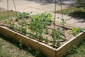 a simple drip irrigation system gather and grow