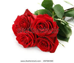 bouquet of roses bouquet stock images royalty free images vectors