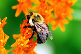 Flowers Bees Pollinate - why bees are important to our planet one green planet