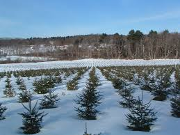 about the mcta maine christmas tree association