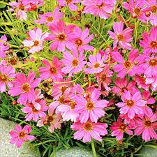 best flowers to attract butterflies