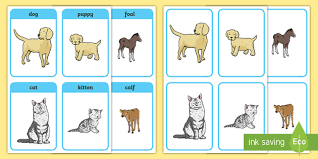 animals and their matching cards animals animal